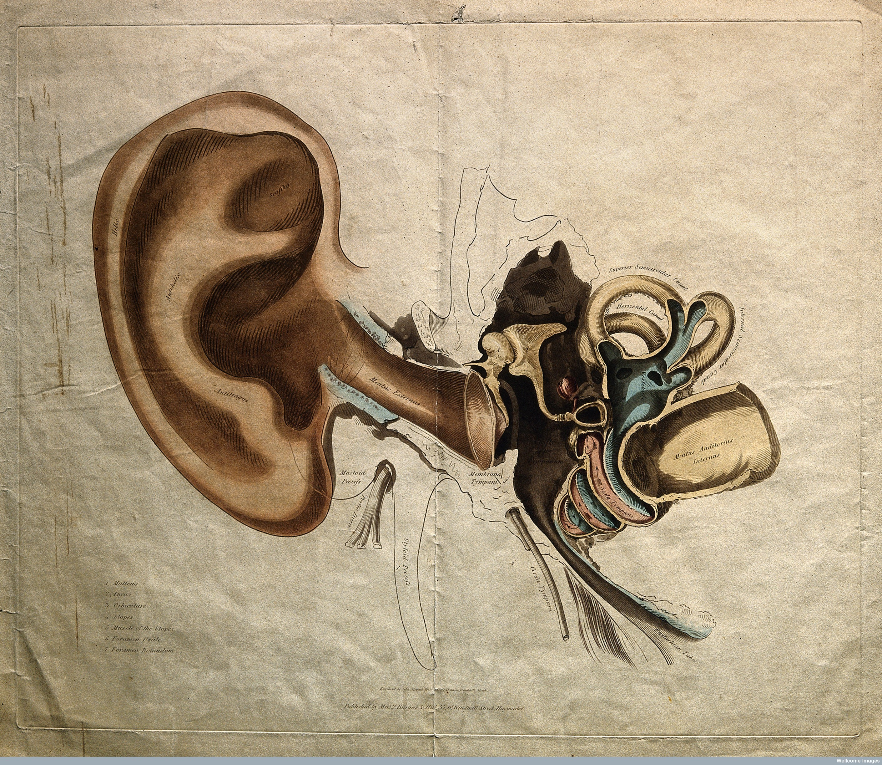 19th century science technology and cultures - V0008879 Structure Of The Outer And Inner Ear Coloured Stipple Credit Wellcome Library