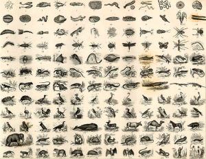 Natural History Chart (4)
