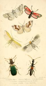 Ent. Annual 1855 Frontispiece